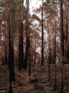 Burnt Bush